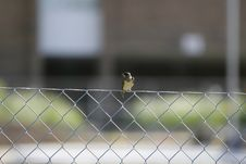 Free Bird Perch Royalty Free Stock Photo - 5757565