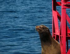 Free Harbor Seal On Buoy Stock Image - 5757851