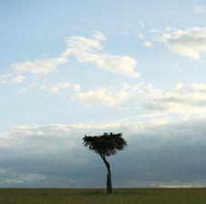 Free Single Acacia Tree Royalty Free Stock Images - 5758249