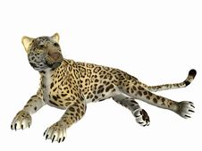 Free Lounging Jaguar Stock Photos - 5759143