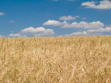 Free Landscape With Wheat Field And Blue Sky Background Stock Photography - 5759152