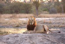 Free Lion In Sabi Sands Stock Photos - 5759543