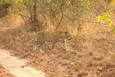Free Leopard In The Sabi Sands Stock Images - 5759564