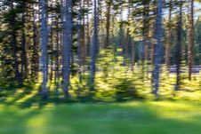 Free Motion Blur Of Trees Stock Image - 57587621