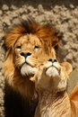 Free Lion And Lioness Stock Photography - 5760382