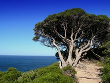 Tree Overlooking Cape Naturaliste Royalty Free Stock Image