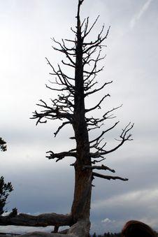 Free Single Tree Royalty Free Stock Image - 5760526