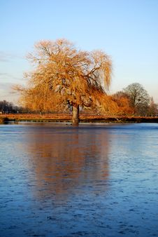 Free Tree Reflected In Frozen Lake Royalty Free Stock Image - 5760806