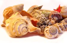 Free Seashells Macro Stock Photography - 5760932