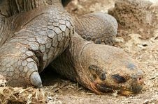 Free Resting Galapagos Tortoise Stock Images - 5761024