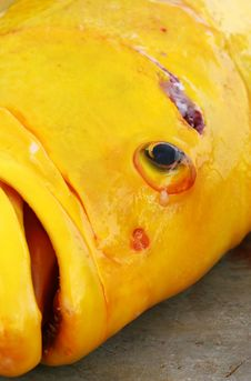 Free Large Yellow Fish Stock Photography - 5761282