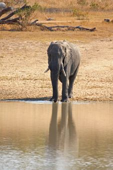 Free Elephant In Sabi Sands Royalty Free Stock Image - 5761736