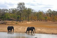 Free Elephant In Sabi Sands Stock Image - 5761821