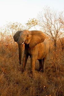 Free Elephant In Sabi Sands Stock Photo - 5761840