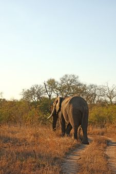 Free Elephant In Sabi Sands Royalty Free Stock Photo - 5762125