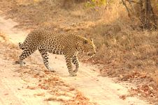Free Leopard In The Sabi Sands Royalty Free Stock Photo - 5762885