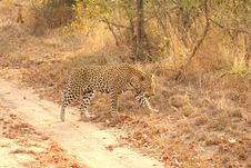 Free Leopard In The Sabi Sands Stock Image - 5762931