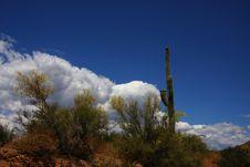 Free Desert Spring Stock Images - 5763414