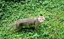 Free Wild Cat In Leaves Royalty Free Stock Images - 5763479