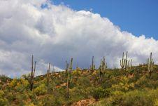 Free Desert Spring Stock Image - 5763491