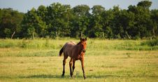 Free Foal Royalty Free Stock Photos - 5763758
