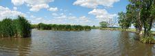 Free Cane On Lake Royalty Free Stock Images - 5765029