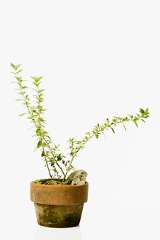 Decorative Plant Stock Photography