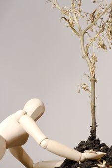 Wooden Man Plant Tree Stock Image