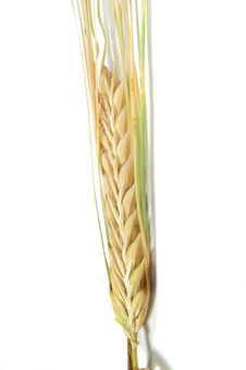 Free Wheat Ear On White Background Stock Images - 5767404