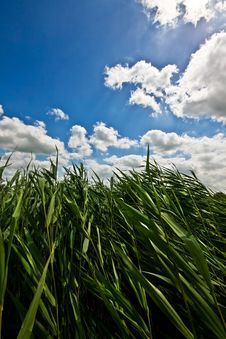 Free Grass In The Wind Stock Photo - 5768780