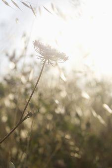 Free Separate Wildflower Royalty Free Stock Image - 5768846