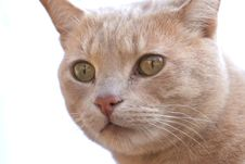 Free Ginger Cat Face Stock Images - 5768894