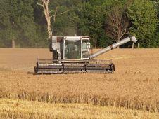 Free Wheat Harvest Stock Photo - 5769980