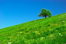 Free Green Field And Lonely Tree Stock Photo - 5770050