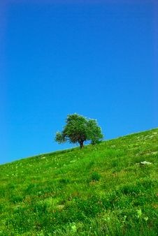 Free Green Field And Lonely Tree Stock Photo - 5770060