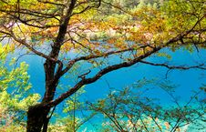 Free Trees And Blue Water Royalty Free Stock Image - 5770076