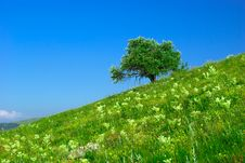 Free Green Field And Lonely Tree Royalty Free Stock Photography - 5770077
