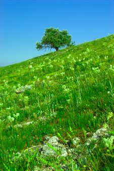 Free Green Field And Lonely Tree Royalty Free Stock Image - 5770096