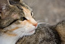 Free Close Up Of A Cat Royalty Free Stock Image - 5770556