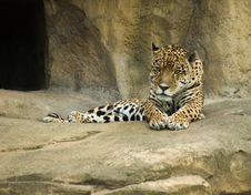 Free Jaguar (Panthera Onca) Stock Image - 5771111