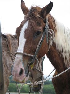 Free Brown And White Horse Stock Image - 5771231