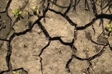 Free Drought. Royalty Free Stock Image - 5771346