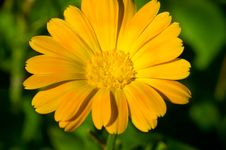 Free Flower Royalty Free Stock Photography - 5771497