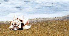 Free Shell On The Seaside Royalty Free Stock Photos - 5771978