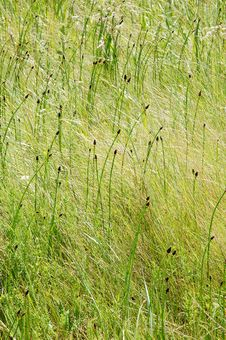Free Grass Field Royalty Free Stock Photography - 5774987