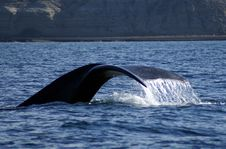Free Right Whale Tail Stock Images - 5775104