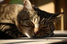 Free Sleeping Cat Stock Photos - 5775993