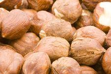 Free Hazelnuts Royalty Free Stock Photos - 5776798
