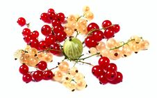 Fresh Red, White Currants And Gooseberry Royalty Free Stock Images