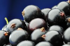 Free Black Currants. Royalty Free Stock Image - 5778346